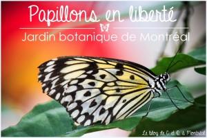 Il s'agit de l'édition de 2014 des Papillons en liberté du Jardin botanique de Montréal, que vous pouvez voir lorsque vous êtes de sortie à Montréal.