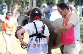 Mondial endurance compiègne 2014 vétérinaire où est morte L'Eremita di Gallurn