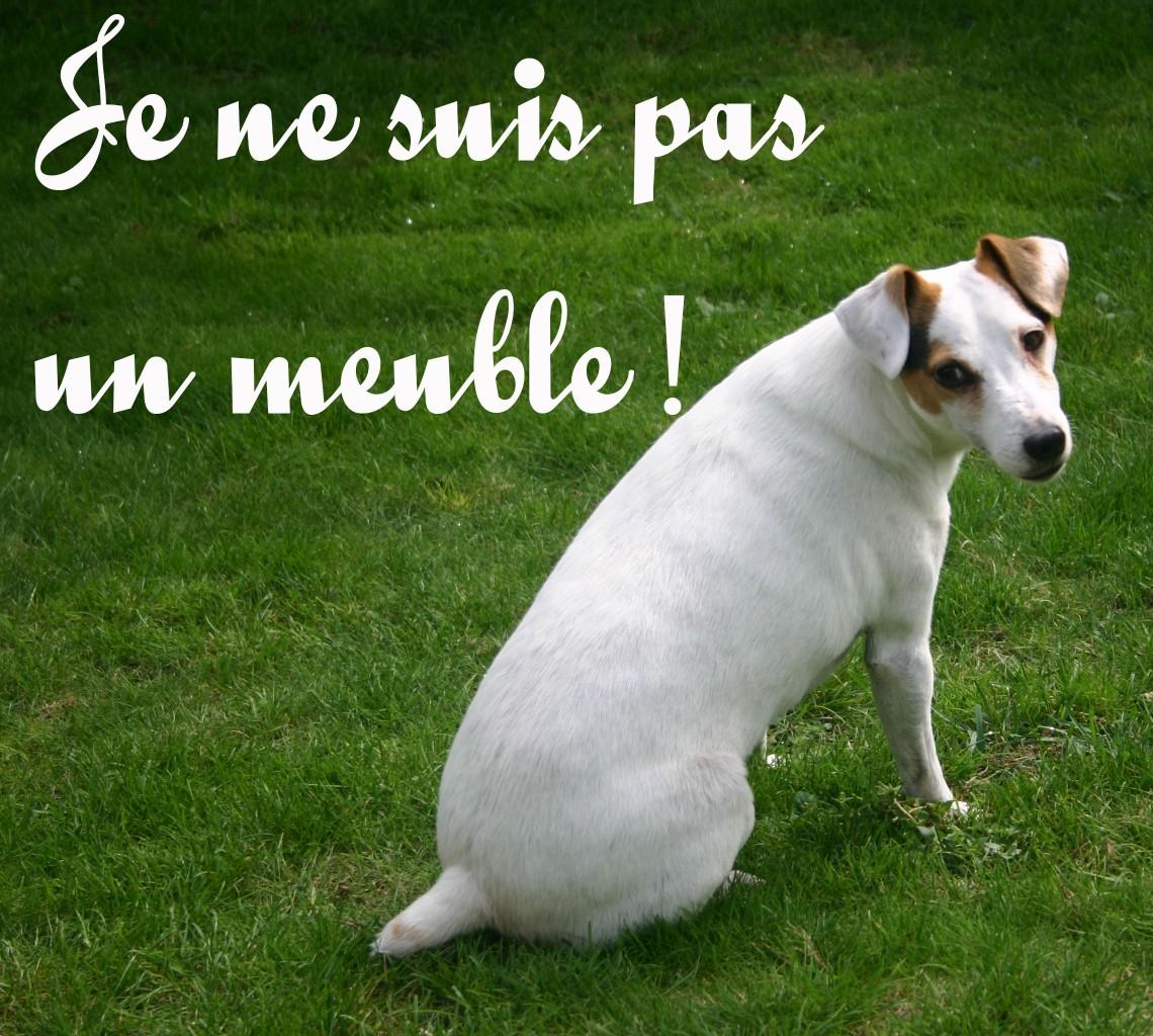 Statut juridique des animaux domestiques : « êtres vivants doués de sensibilité » et non plus « biens meubles »