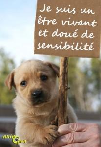 Statut juridique animaux : de bien meuble à l'être doué de sensibilité