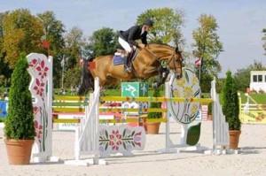 Race cheval Selle Français Dollar du Mûrier