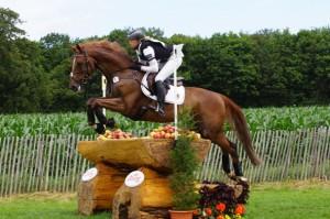 Race cheval Selle Français Opgun Louvo