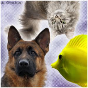 Les trois animaux de compagnie les plus présents dans les foyers français