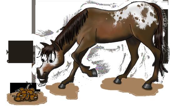 Vers vermifugation cheval parasite