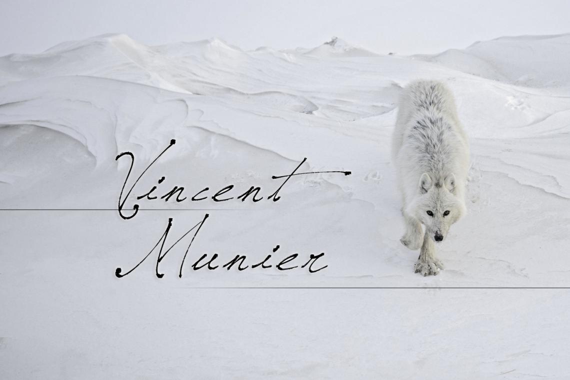 La nature sauvage à travers les photographies de Vincent Munier