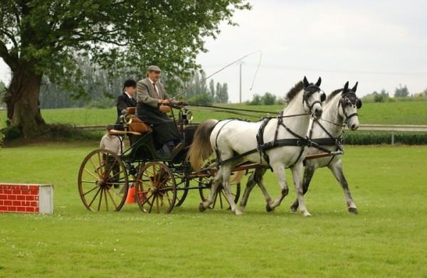 Equitation attelage