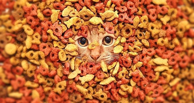 Choisir l'alimentation de son chat