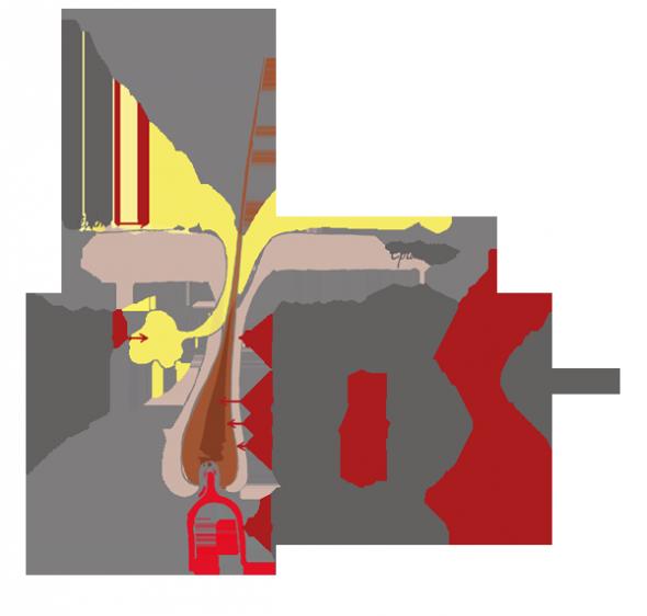 le sébum est issu des glandes sébacées