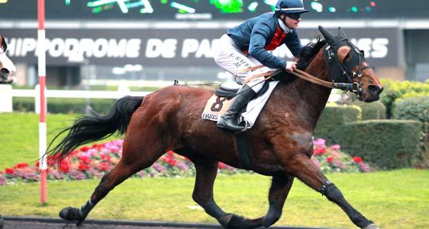 Trotteur français course montée