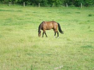 le cheval différencie les plantes comestibles ou non