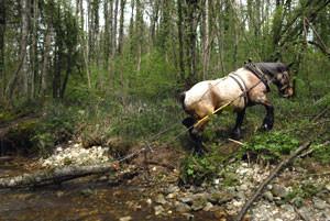 avantages débardage à l'aide de chevaux