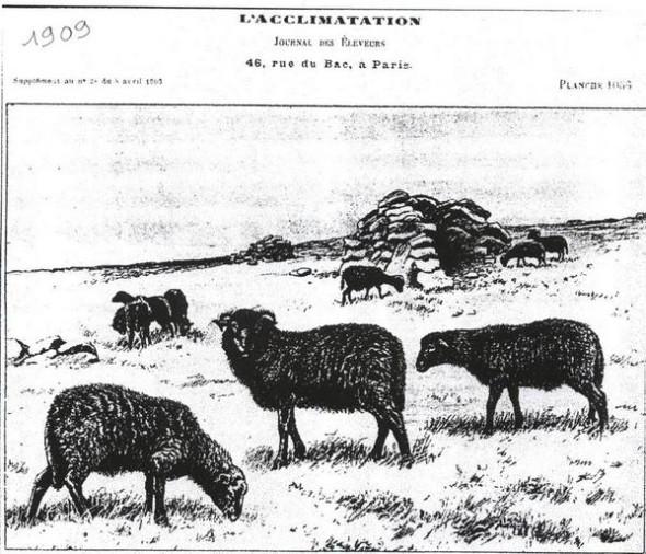 dessin paru en 1909 en couverture d'un journal - copie