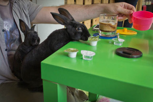 bar à lapins