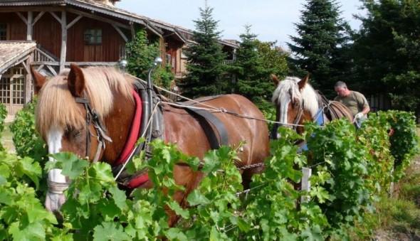 cheval insertion