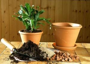 rempoter une plante dans un nouveau pot