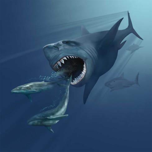 Il s'agissait d'un requin géant