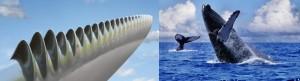 nageoire de baleine inspire les pales des éoiliennes