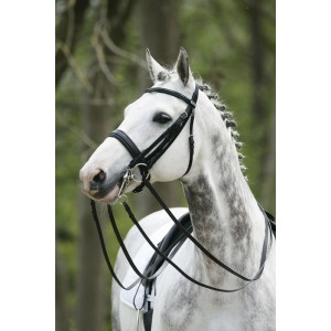Influence du serrage de la muserolle sur le comportement du cheval