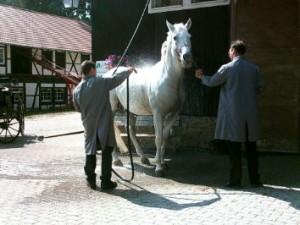 doucher son cheval aux beaux jours