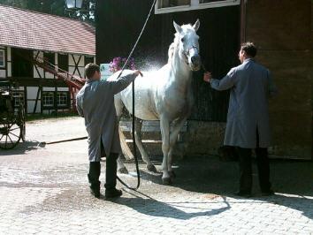Doucher son cheval