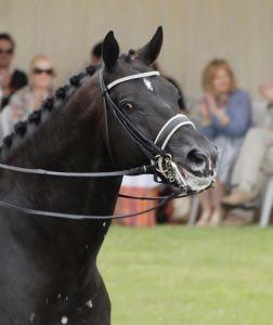 Si un cheval bave, ça n'est pas forcément qu'il est décontracté, ça peut être parce qu'il a du mal à déglutir !