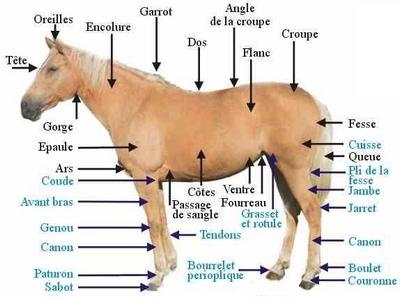 Tonte du cheval
