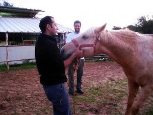 cheval debout lors castration