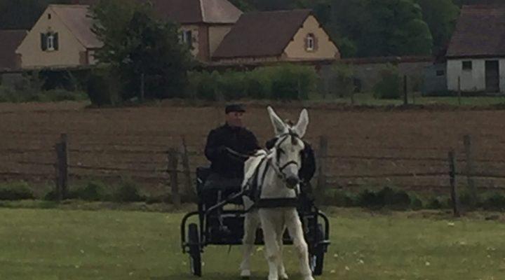 La 23e édition du concours d'attelage d'ânes à Villotran