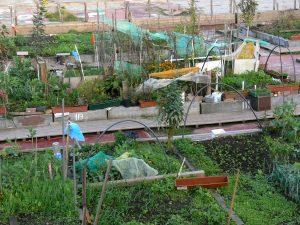 jardin communautaire en ville pour les citadins