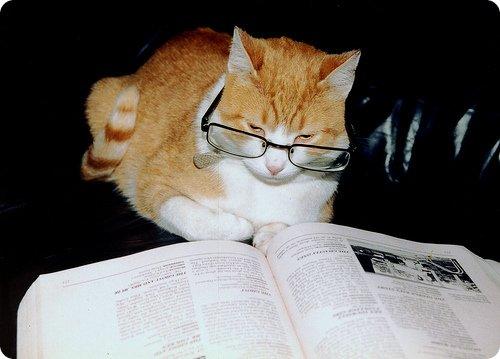 chat lunettes