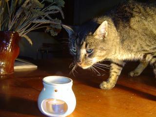 chat huile essentielle