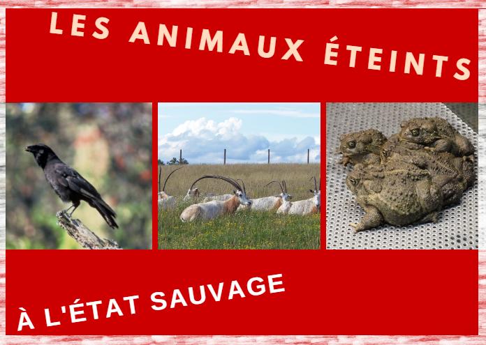 Les animaux éteints à l'état sauvage