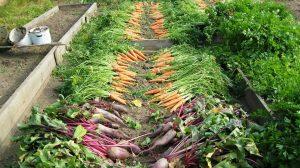 Les jardins solidaires, un moyen de cultiver en partageant