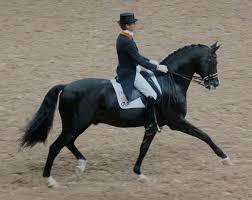 Concours complet d'équitation CCE dressage