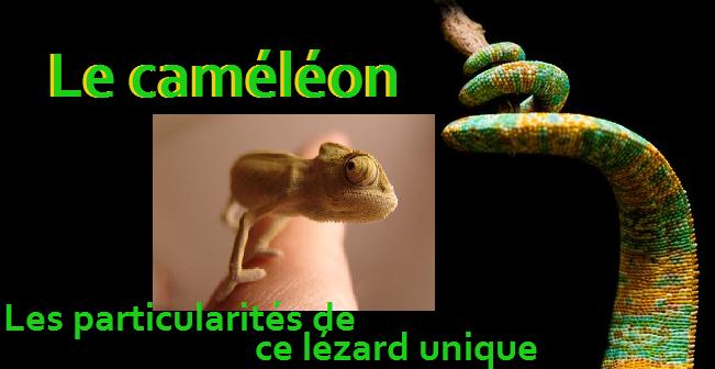 Le caméléon : les particularités de ce lézard unique