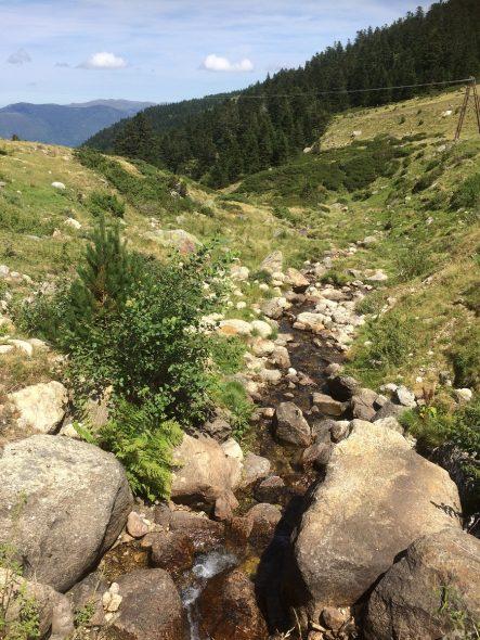 Pour faire de belles rencontres vous pouvez aller à la montagne en été