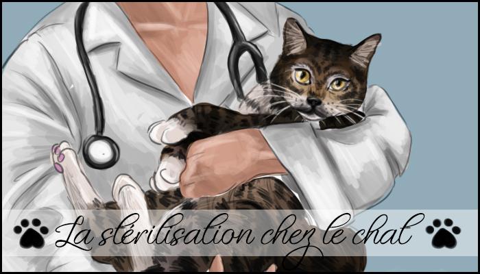 La stérilisation chez le chat