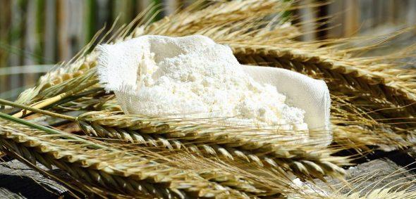 Du blé tendre est produit en France