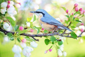 La nature reprend ses droits au printemps