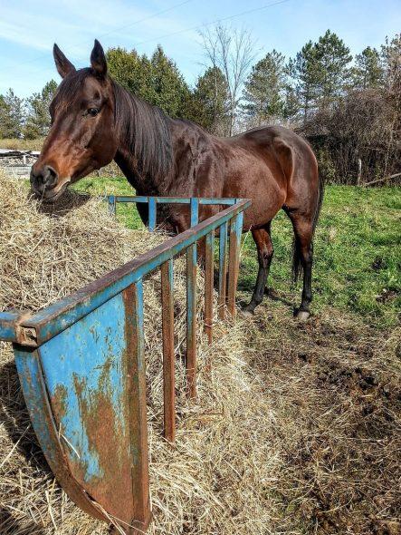 Alimentation cheval pré