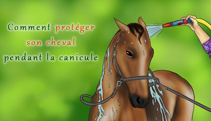 Les bons gestes à adopter pour son cheval pendant la canicule